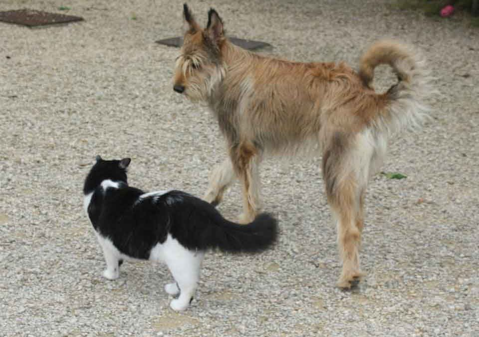 Hera et Goliath