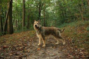 Hasko de l ' Abbaye des sources bleues en ballade en forêt ce dimanche 4 Octobre 2014.