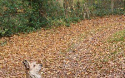 Automne, l'écureuil stoppe le picard dans son élan