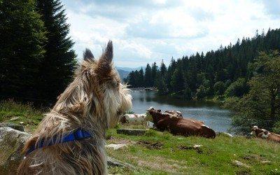 Iolette dans les Vosges