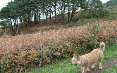 Ed-Du sur le sentier côtier, l'automne est bien installé