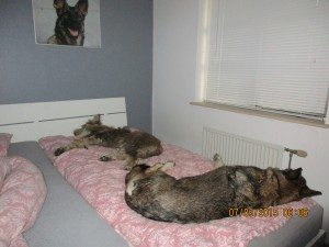 6 heures du matin, Jytte est debout, mais j'en vois 2 qui n'ont aucune envie de quitter le lit