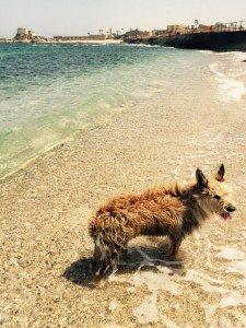 Et je patauge, vive la mer....