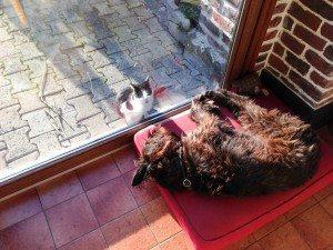 Tellement épuisée que je ne fais même pas attention u chat, et pourtant...