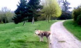 Les pelouses sont bien vertes dans les parcs de l'Ile de France