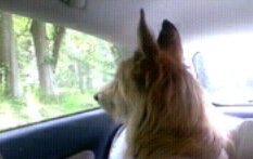 En voiture...