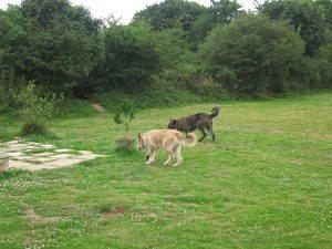 Quand 2 picards se rencontrent en Cornouailles, Patsou et Luc