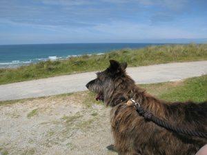 Lendemain de l'arrivée, découverte des plages de Cornouailles...