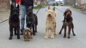 Balade avec toutes mes nouvelles copines Itouk - Holly - Cheyenne - Fera et devant la plus petite la teckel Chiva
